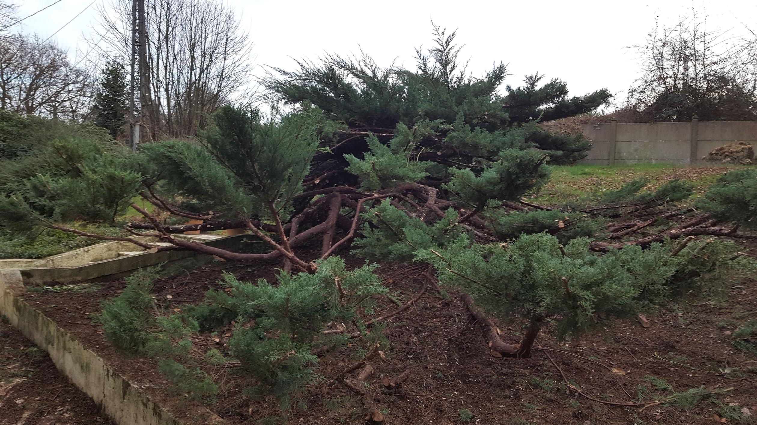 Taille topiaire. Jardins des 4 Saisons. Guer, Ploërmel, Redon, Plélan-Le-Grand, Maure de Bretagne